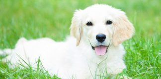 la vera età del cane
