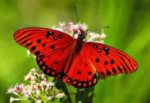 farfalle i consigli di liberEtà