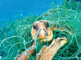 inquinamento mare e spiagge