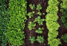 orto e giardino di fine estate