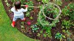 orti e giardini di giugno