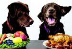 sos diabete cani e gatti